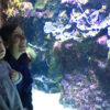 slider    aquarium